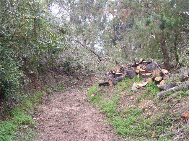 A rough unpaved trail winds past thick brush on the left side and cut up tree trunks on the right.