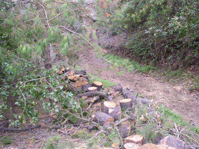 A rough dirt path has chopped tree trunks on the left side and thick brush on the right.