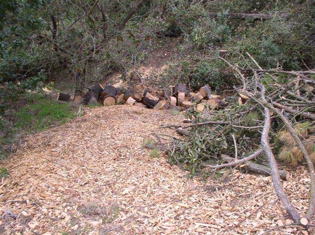 Wood chips are scattered along a steep hillside and chopped-up tree trunks line a narrow gulch at the bottom of the hillside.
